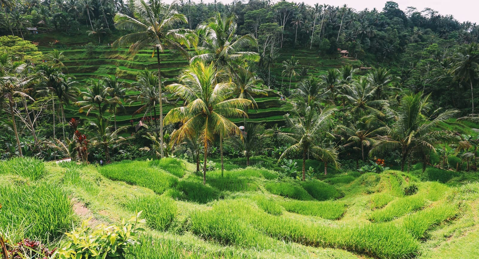 The Best Bali Day Trip: Waterfalls And Rice Terraces In Ubud